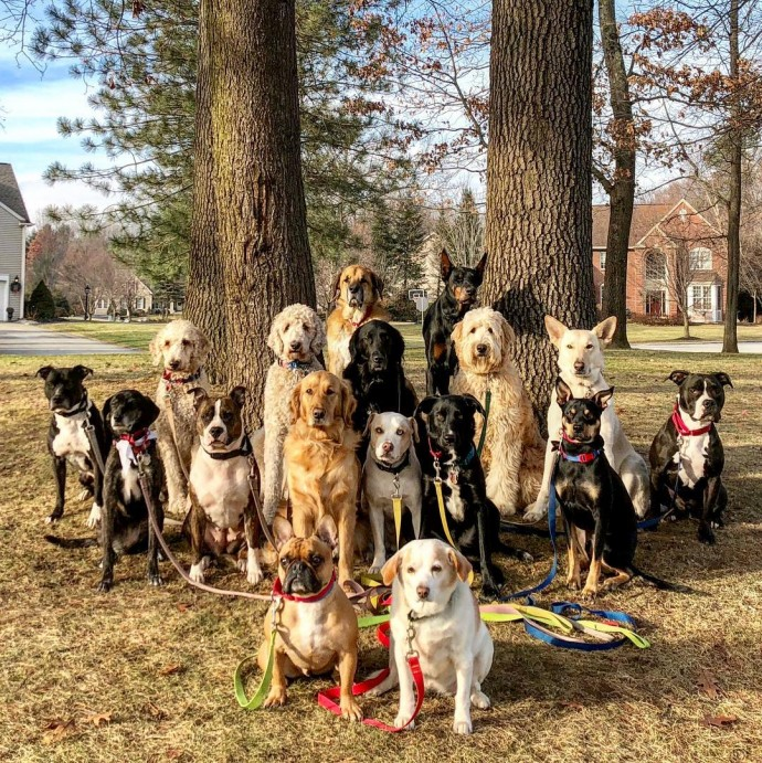 This image has an empty alt attribute; its file name is dog-walker-posts-photos-of-the-packs-he-walks-everyday-and-they-are-adorable-01.jpg