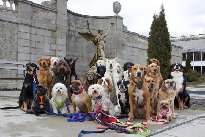 This image has an empty alt attribute; its file name is dog-walker-posts-photos-of-the-packs-he-walks-everyday-and-they-are-adorable-02.jpg