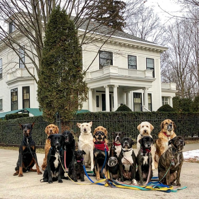 This image has an empty alt attribute; its file name is dog-walker-posts-photos-of-the-packs-he-walks-everyday-and-they-are-adorable-03.jpg