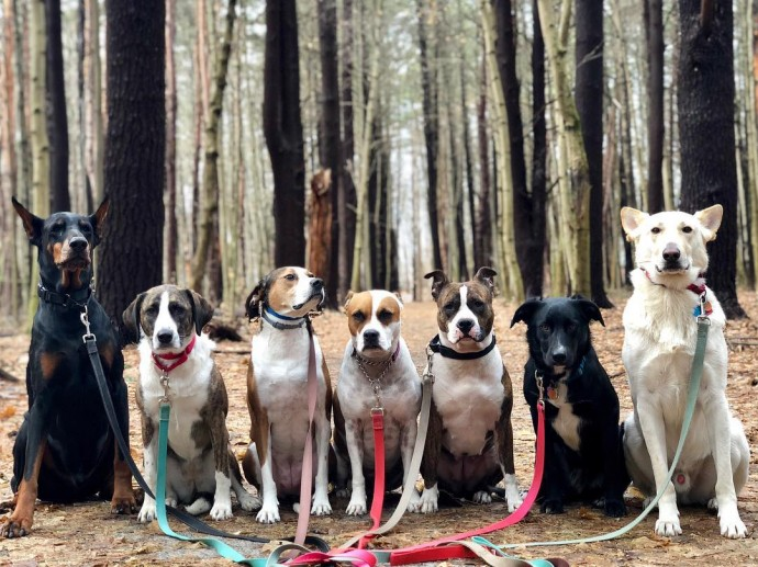 This image has an empty alt attribute; its file name is dog-walker-posts-photos-of-the-packs-he-walks-everyday-and-they-are-adorable-04.jpg