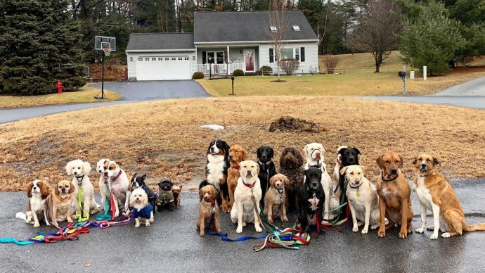 This image has an empty alt attribute; its file name is dog-walker-posts-photos-of-the-packs-he-walks-everyday-and-they-are-adorable-05.jpg
