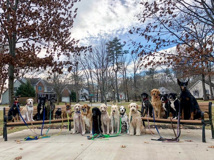 This image has an empty alt attribute; its file name is dog-walker-posts-photos-of-the-packs-he-walks-everyday-and-they-are-adorable-06.jpg