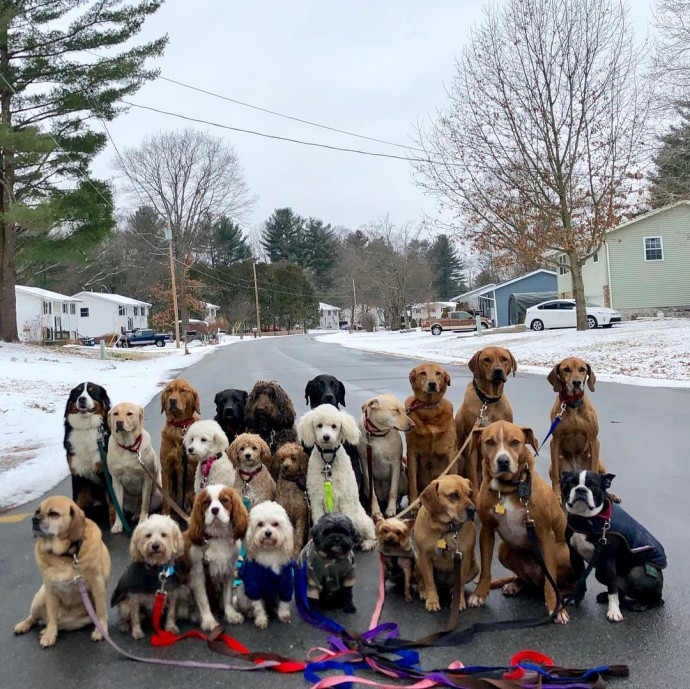 This image has an empty alt attribute; its file name is dog-walker-posts-photos-of-the-packs-he-walks-everyday-and-they-are-adorable-07.jpg