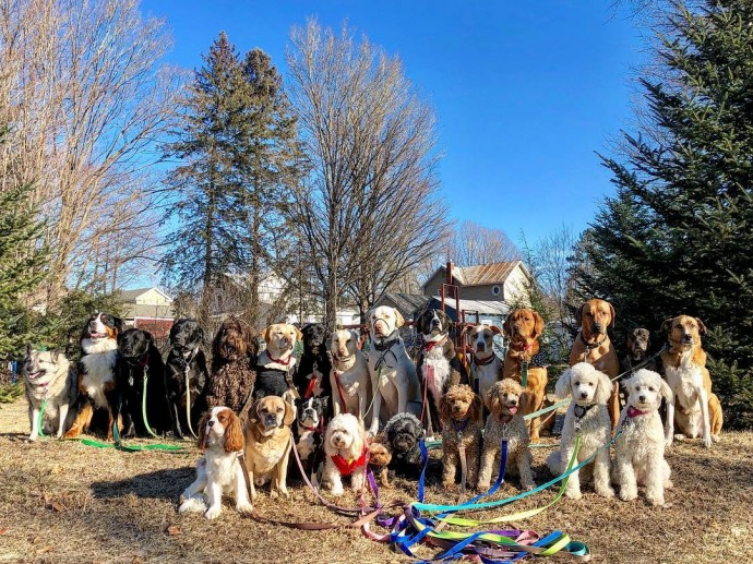 This image has an empty alt attribute; its file name is dog-walker-posts-photos-of-the-packs-he-walks-everyday-and-they-are-adorable-08.jpg