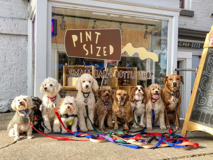 This image has an empty alt attribute; its file name is dog-walker-posts-photos-of-the-packs-he-walks-everyday-and-they-are-adorable-09.jpg