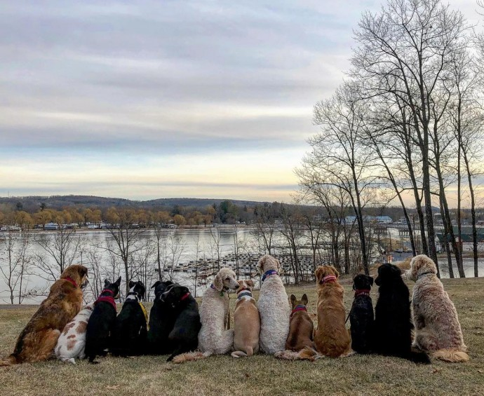 This image has an empty alt attribute; its file name is dog-walker-posts-photos-of-the-packs-he-walks-everyday-and-they-are-adorable-11.jpg