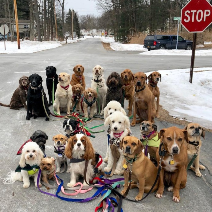 This image has an empty alt attribute; its file name is dog-walker-posts-photos-of-the-packs-he-walks-everyday-and-they-are-adorable-12.jpg