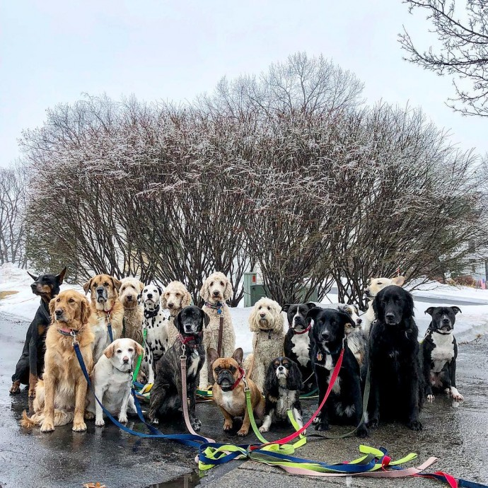 This image has an empty alt attribute; its file name is dog-walker-posts-photos-of-the-packs-he-walks-everyday-and-they-are-adorable-16.jpg