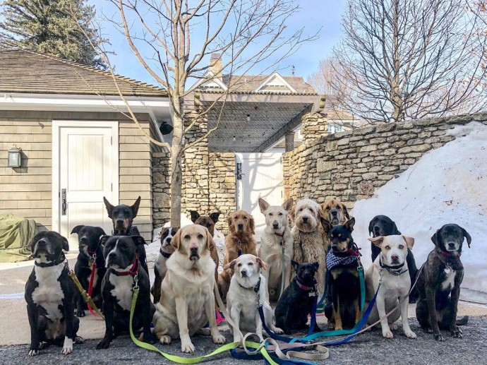 This image has an empty alt attribute; its file name is dog-walker-posts-photos-of-the-packs-he-walks-everyday-and-they-are-adorable-20.jpg