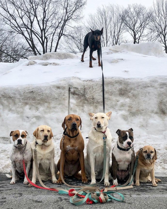 This image has an empty alt attribute; its file name is dog-walker-posts-photos-of-the-packs-he-walks-everyday-and-they-are-adorable-21.jpg
