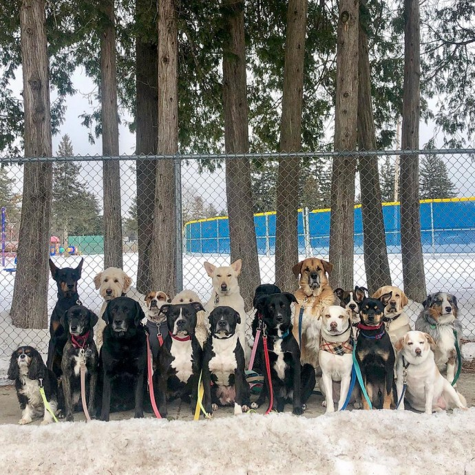 This image has an empty alt attribute; its file name is dog-walker-posts-photos-of-the-packs-he-walks-everyday-and-they-are-adorable-22.jpg