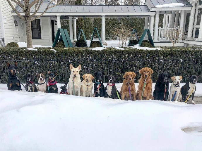 This image has an empty alt attribute; its file name is dog-walker-posts-photos-of-the-packs-he-walks-everyday-and-they-are-adorable-23.jpg