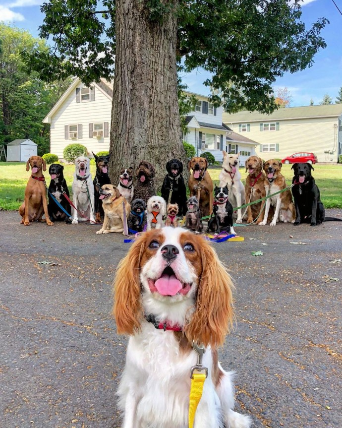 This image has an empty alt attribute; its file name is dog-walker-posts-photos-of-the-packs-he-walks-everyday-and-they-are-adorable-25.jpg