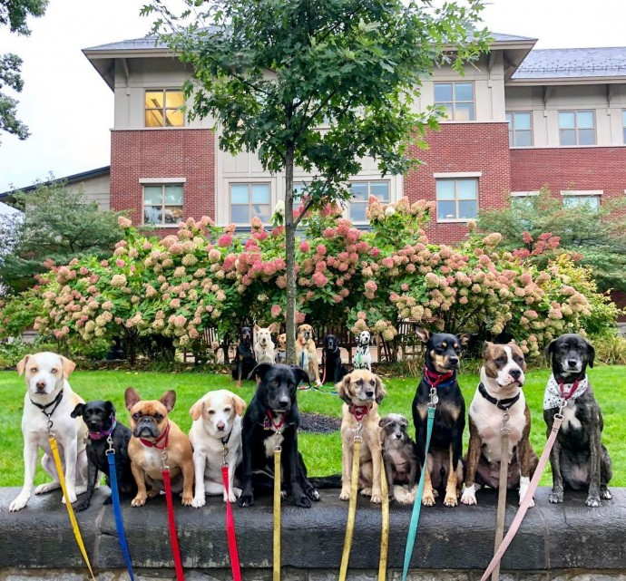 This image has an empty alt attribute; its file name is dog-walker-posts-photos-of-the-packs-he-walks-everyday-and-they-are-adorable-27.jpg