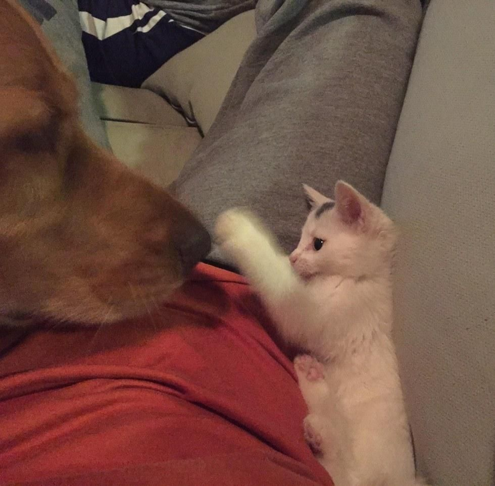 Dog Takes in Motherless Kitten and Raises Him as His Own, Now 2 Years Later  - Love Meow