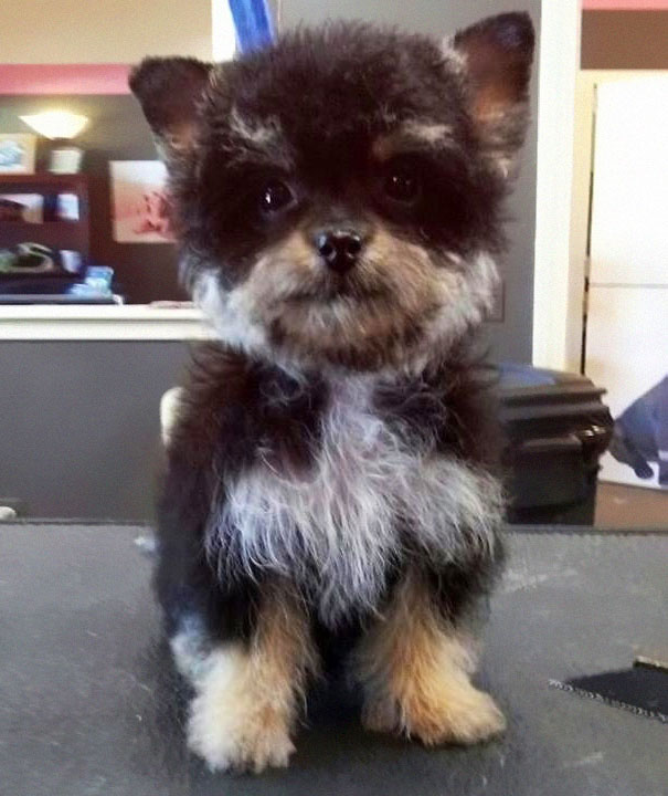 funny-dogs-mixed-breeds-65