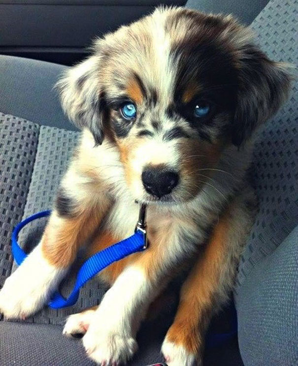 mixed-breed-dogs-10