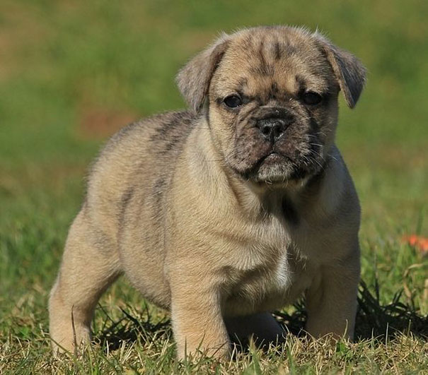 mixed-breed-dogs-25