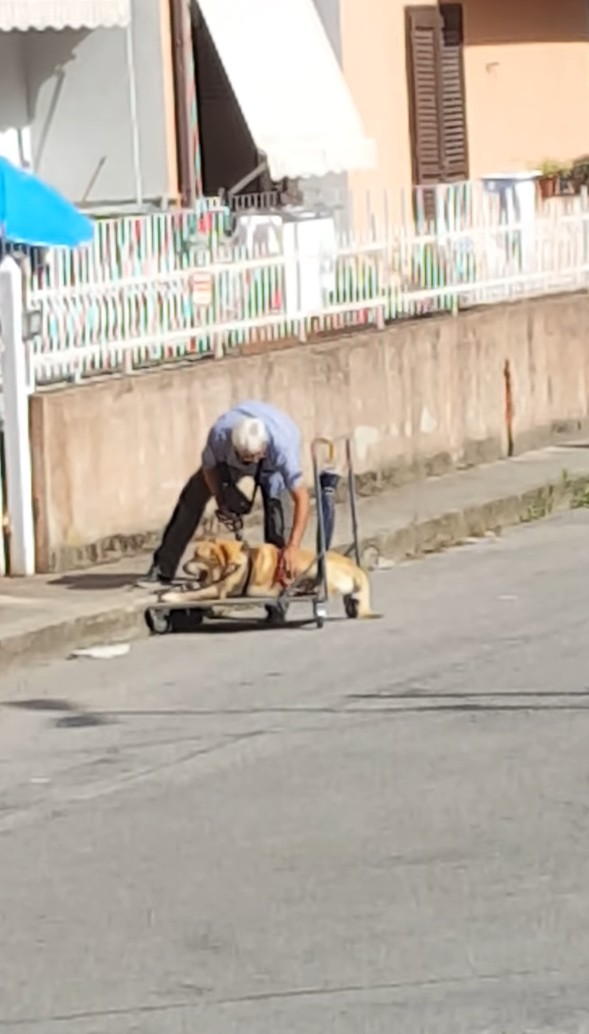 This image has an empty alt attribute; its file name is devoted-grandpa-takes-his-sick-senior-dog-on-a-walk-every-day-01-4.jpg