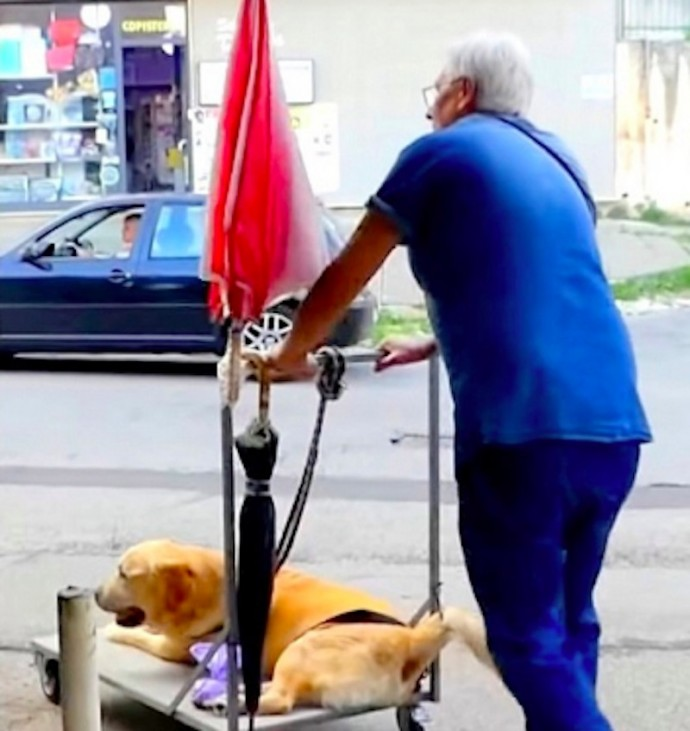 This image has an empty alt attribute; its file name is devoted-grandpa-takes-his-sick-senior-dog-on-a-walk-every-day-01-6.jpg